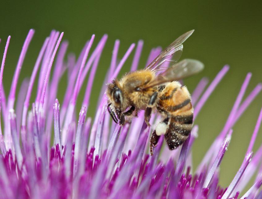 Jardiniers amateurs: fin de l'utilisation de pesticides de synthèse au 1er janvier 2019