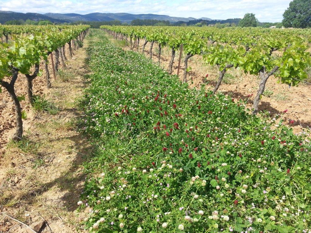4 avril: formation «Comprendre le fonctionnement du sol par les plantes bio-indicatrices»