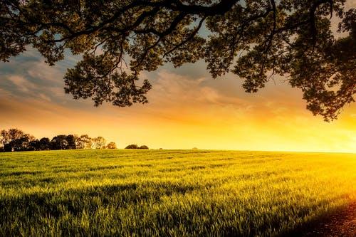 Consultations publiques en cours : usage des pesticides et droit de préemption sur les AAC
