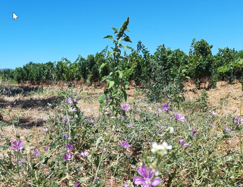 Solutions agroécologiques : quand la biodiversité se met au service des activités agricoles